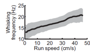 Run faster, whisker faster (From: Sofroniew et al. 2014).